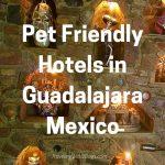 Pet Friendly Guadalajara Mexico