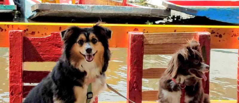 Xochimilco-pet-friendly-3