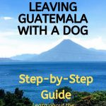 Bringing A Pet Home From Guatemala: A Step by Step Guide