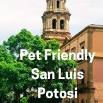 Pet Friendly Airbnb in San Luis Potosi