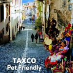 Pet Friendly Places To Visit In Taxco Mexico