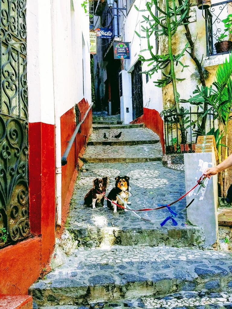 pet-friendly-taxco-mexico