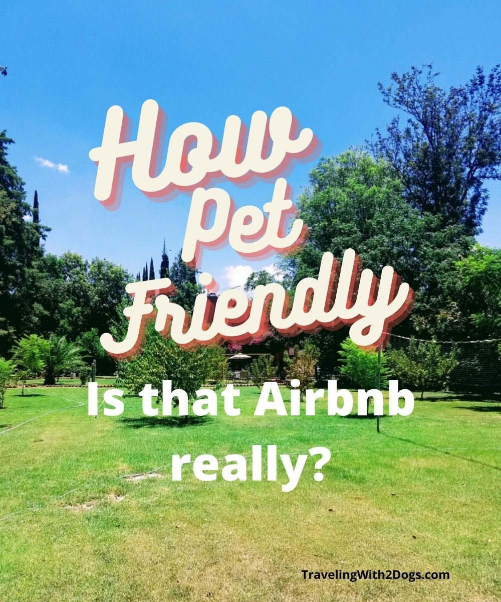 10 Pet Friendly Airbnb Rental Reviews in Mexico