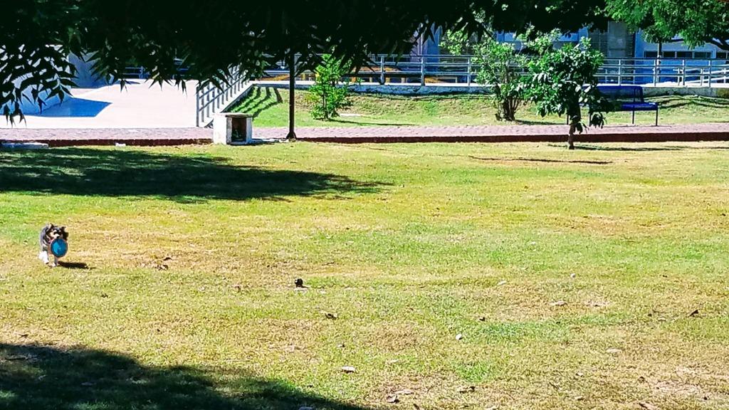 aleman-park-merida