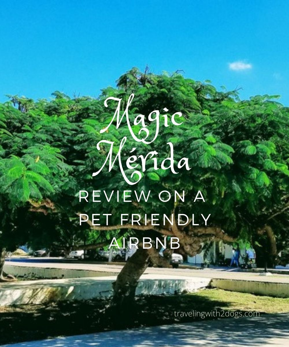 Pet Friendly Airbnb – Mérida Mexico