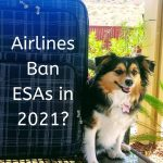 Emotional Support Animals Banned on Airlines in 2021?