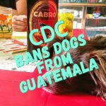 CDC Temporarily Bans Dogs from Guatemala
