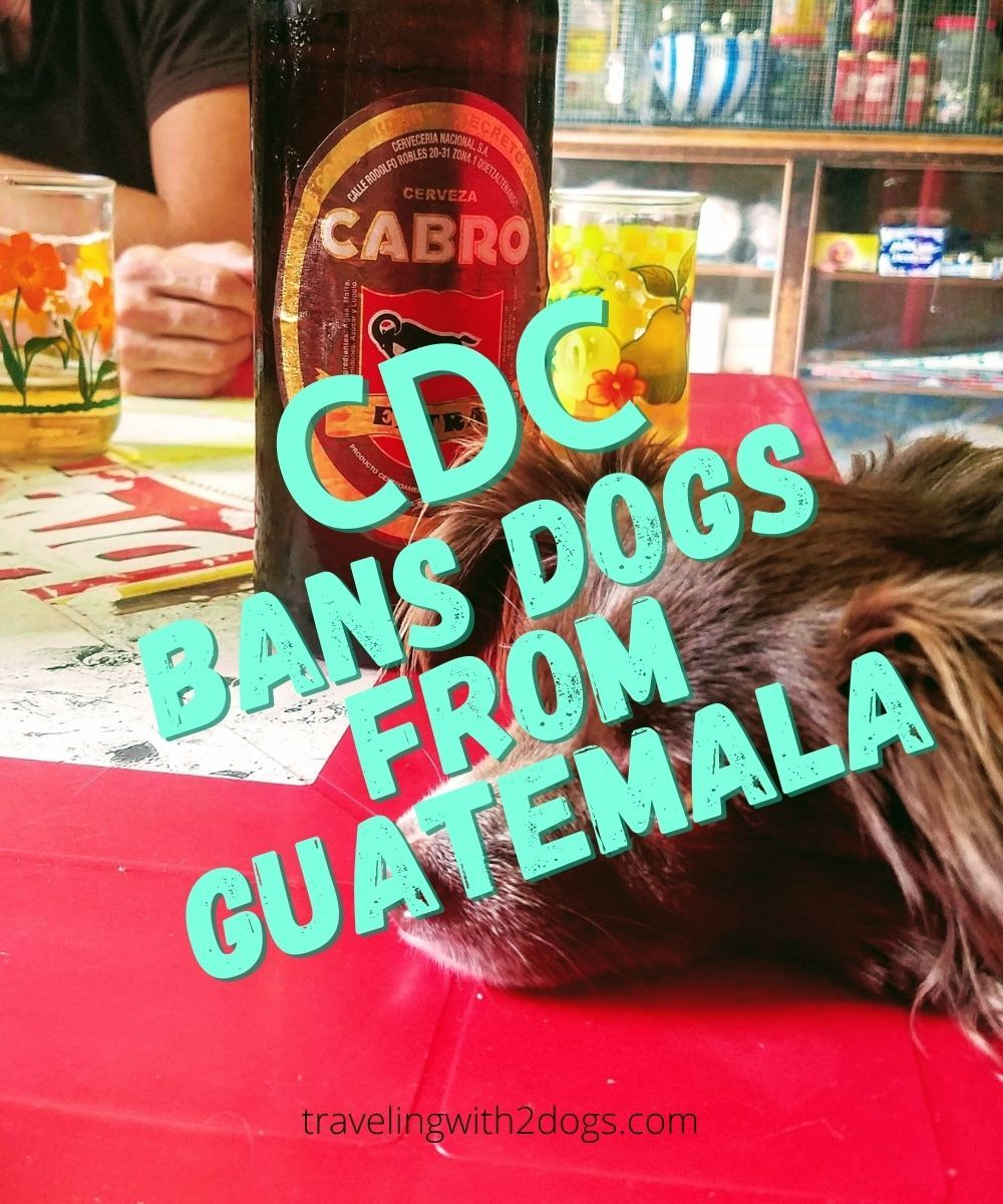 You are currently viewing CDC Temporarily Bans Dogs from Guatemala