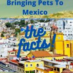 Traveling with Dogs To Mexico – The Facts