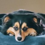 Airlines That Still Accept Emotional Support Animals